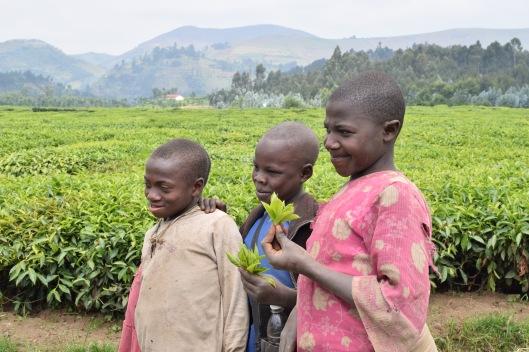 Niños recogiendo hojas de té para ofrecérselas a los turistas